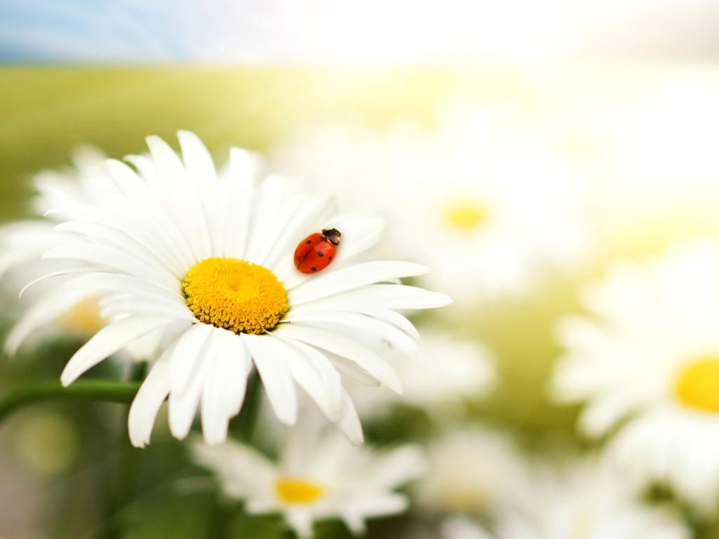 Картинки про природу цветы животные 5