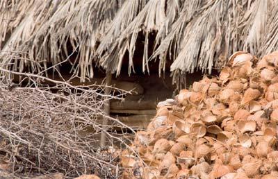 biomasa iz poljoprivrede