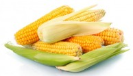 bolesti kukuruza