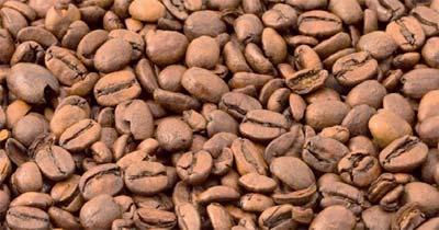 uzgoj kafe