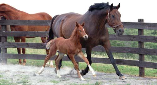 abortusi kod kobila