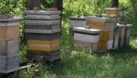 bolesti pčela