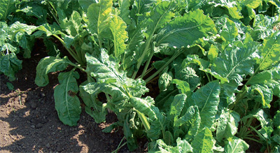 primena herbicida